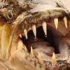Известный рыбак еле выжил после опасной схватки с водными монстрами