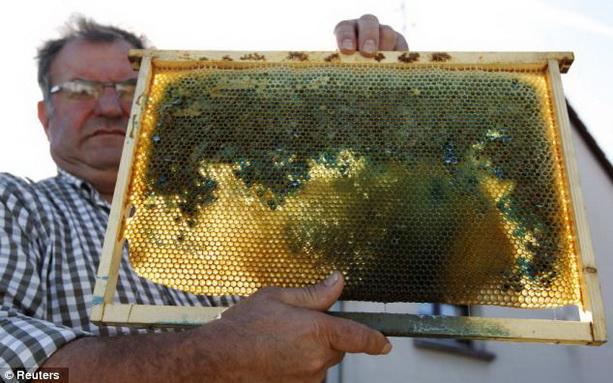 цветной мед соты