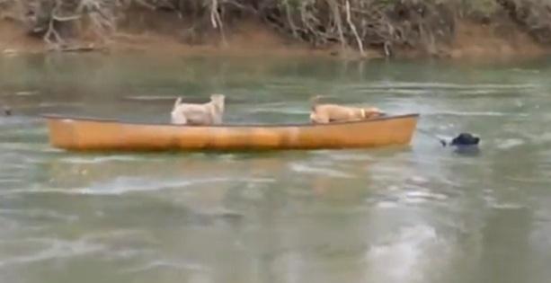 собаки спасение лодка