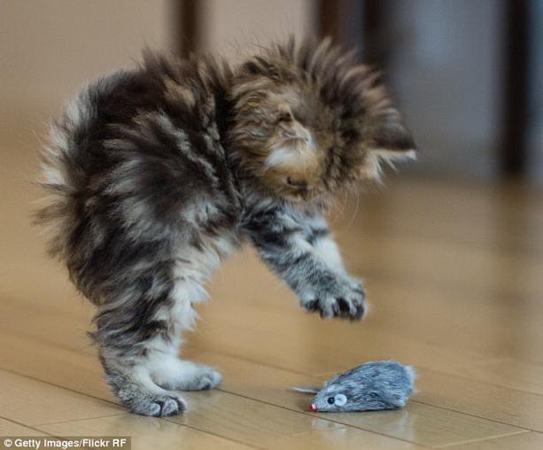 кот мышь