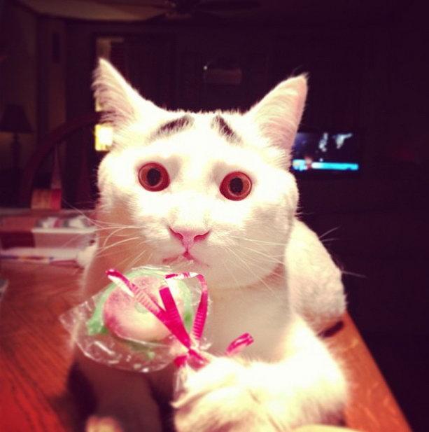 кот сэм и конфета
