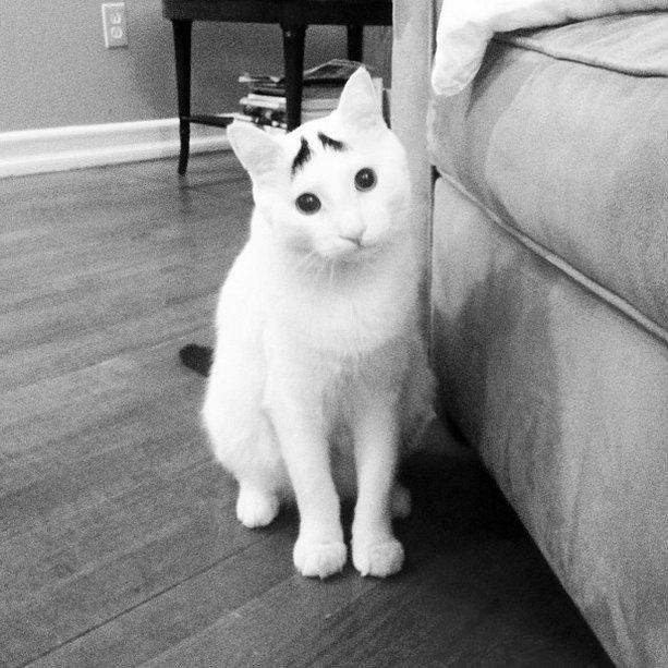 скромный кот сэм