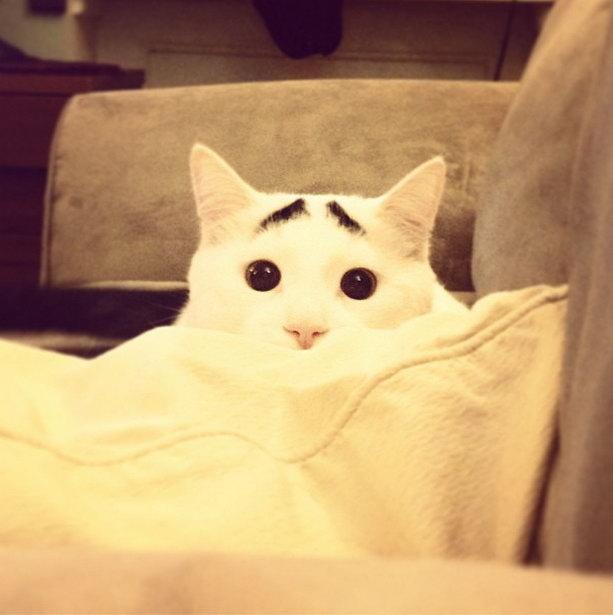 кот с бровями