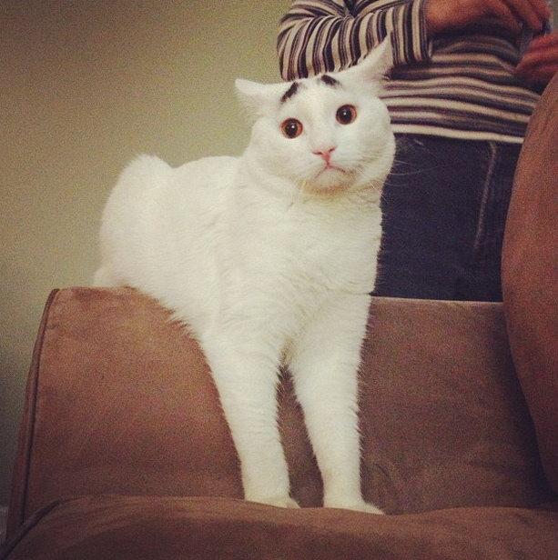 игривый кот сэм