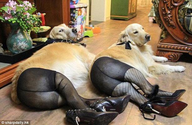 Собаки на шпильках и в колготках