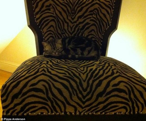 маскировка на кресле