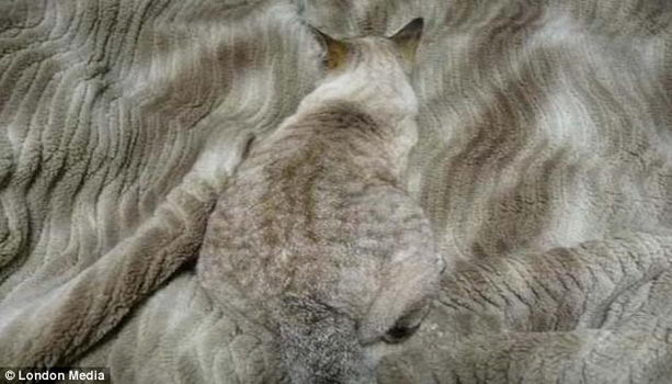 маскировка кота