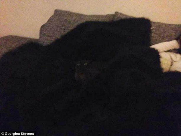 кошка маскируется