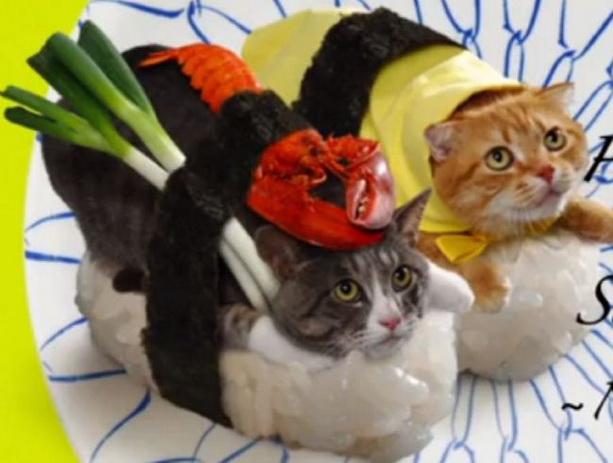 коты костюмы-суши