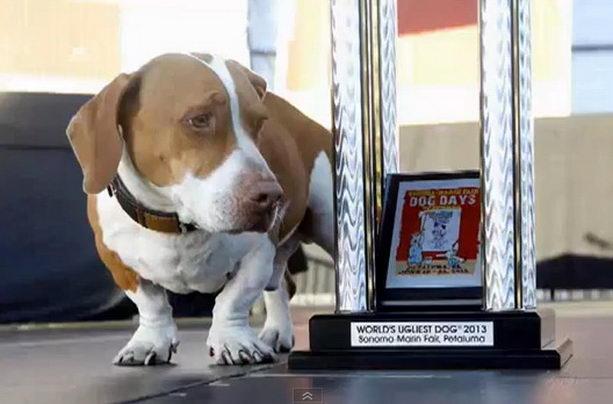 Самая уродливая собака в мире — дворняга Валле