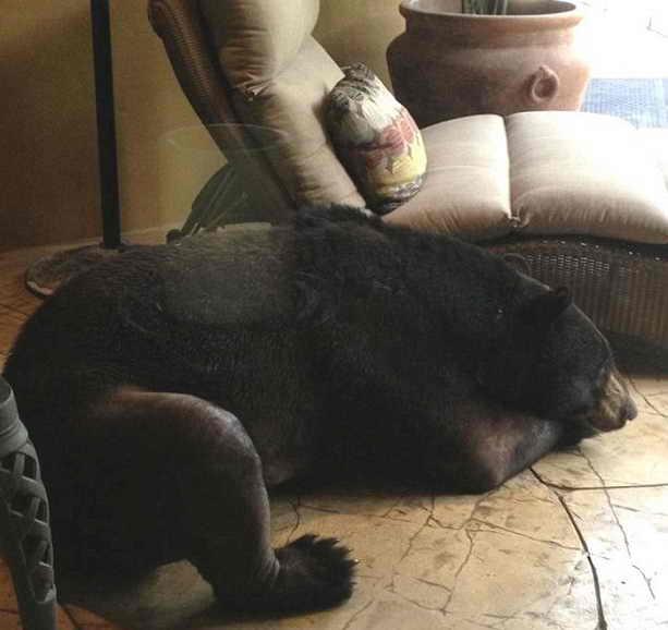 Медведь спит на веранде