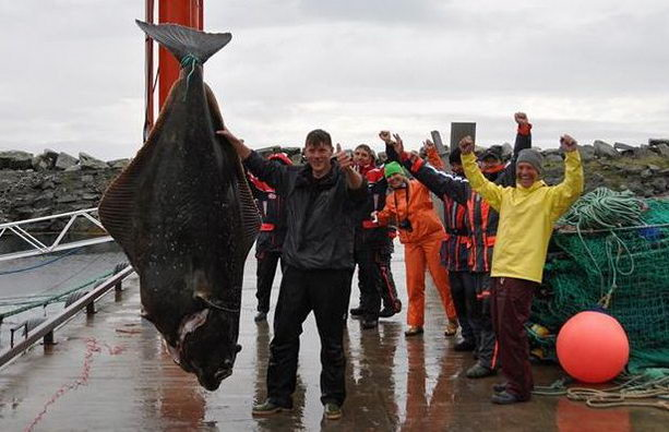Мировой рекорд палтус весом 234 кг