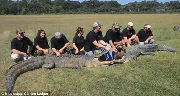 Огромный аллигатор