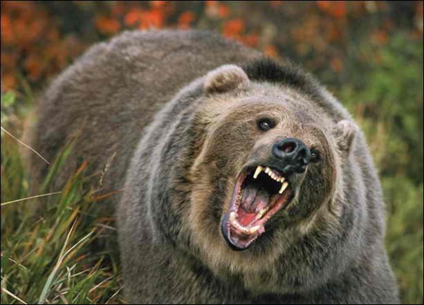 Медведь забрел в торговый центр в Хабаровске, что сняли на видео