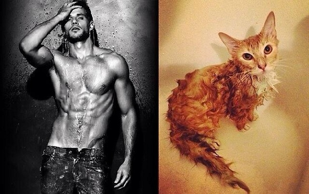 коты как модели