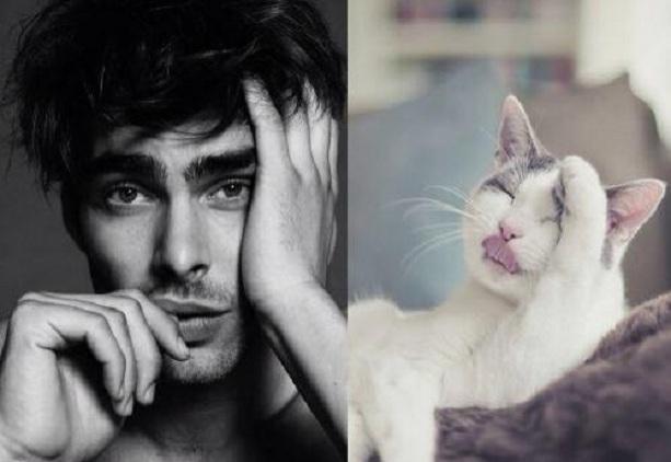 кошки модели