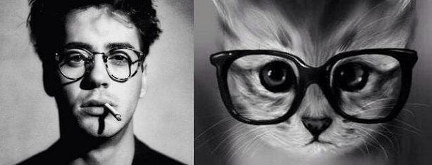 кошки похожи на людей