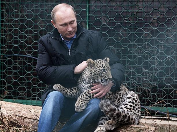 Путин леопард