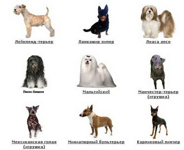 фото и имя собак