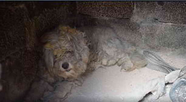 В Греции во время пожаров пес спасся спрятавшись в печи