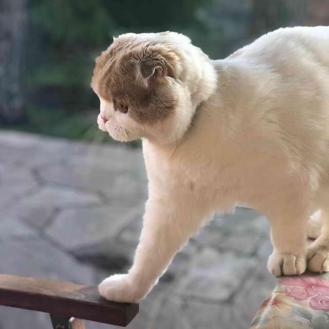Любимый кот Леры Кудрявцевой по кличке Фофа