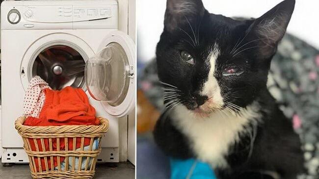 Котенок выжил в стиральной машинке