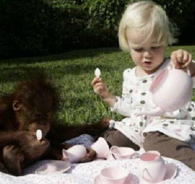 пить вода чай ребенок обезьяна