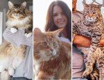 Самые большие коты в Книге рекордов Гиннеса
