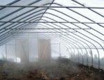 Необходимость и важность обработки тепличных построек